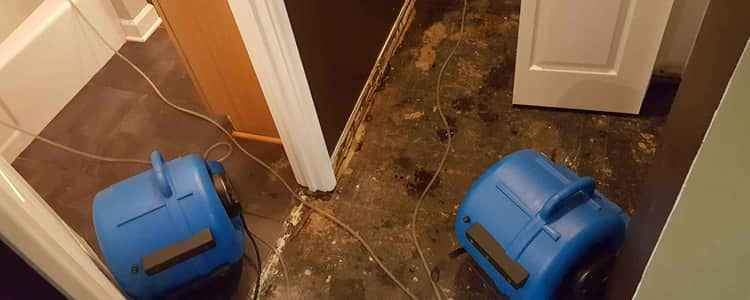 Best Flood Damage Restoration Hoppers Crossing